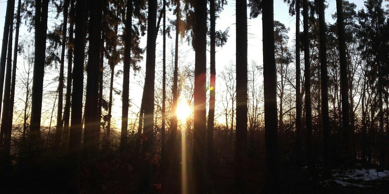 Sonnenaufgang am Lehrpfad im Wald